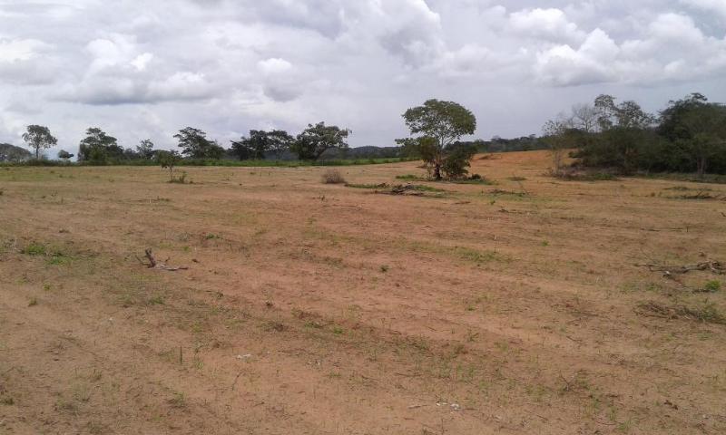 Fazenda  Dom Aquino  - MT