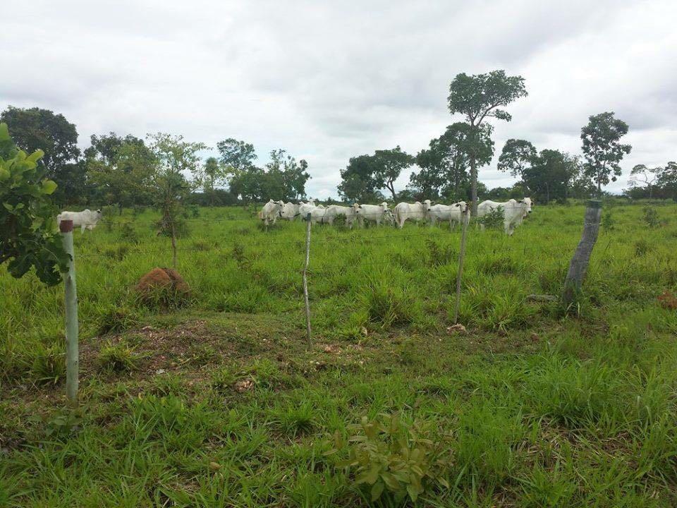 Fazenda  no Área Rural , Nossa Senhora do Livramento  - MT