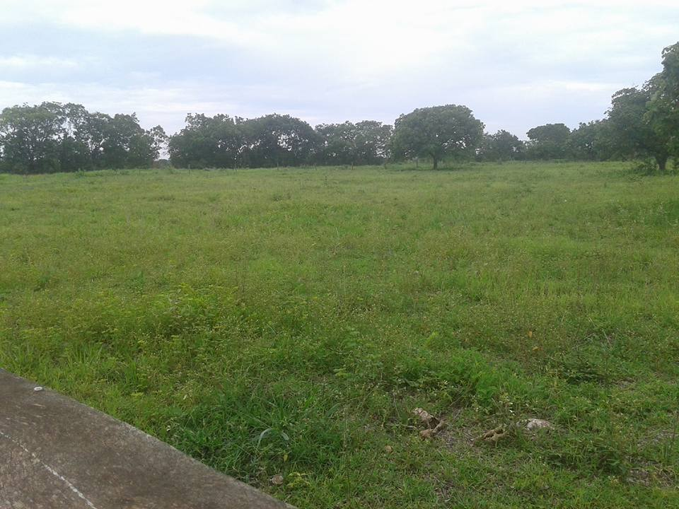 Fazenda  com 6 quartos sendo 6 Suítes no Zona Rural , Nossa Senhora do Livramento  - MT