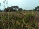 Fazenda - - - - - Chapada dos Guimaraes - MT